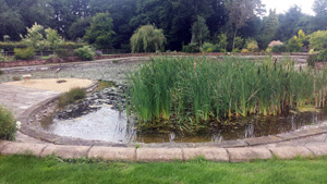 Aquatic plants can quickly take over a water body if not managed